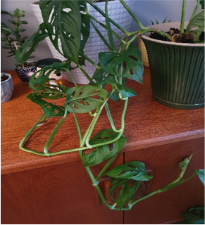 Description: A close up of a plant  Description automatically generated